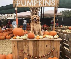 animal, autumn, and dog image