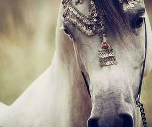 caballo, equine, and horses image