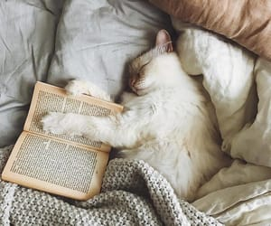 cat, book, and cozy image