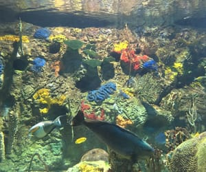 amarillo, peces, and coral reef image