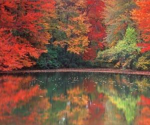 amazing, lake, and leaves image