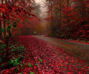 autumn, colors, and nature image