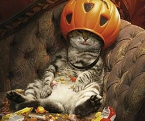 cat and Halloween image