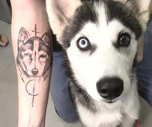 tattoo, dog, and husky image