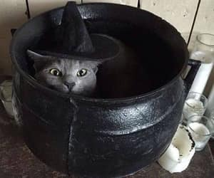 cat, witch, and Halloween image