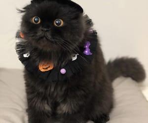 animal, cat, and Halloween image