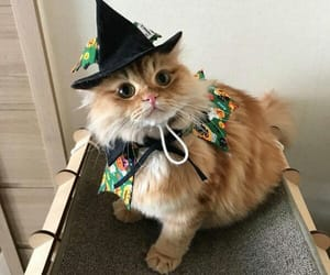 cat, animal, and Halloween image