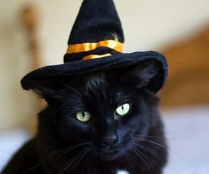 cat, Halloween, and autumn image