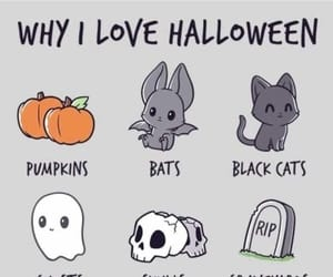 pumpkin, Halloween, and black cat image