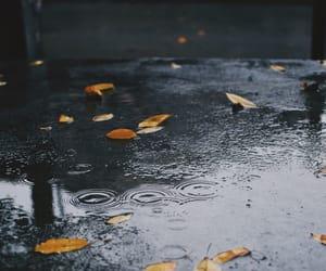 autumn, leaf, and leaves image