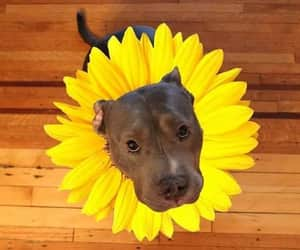 dog, flower, and yellow image