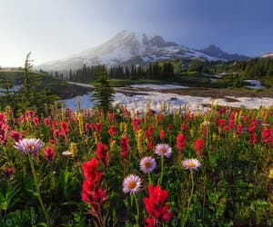 flowers, aesthetic, and mountains image