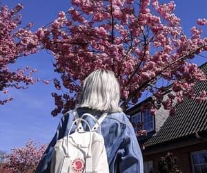 backpack, fjallraven kanken, and tree image
