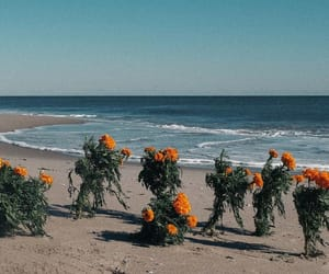 beach, flowers, and indie image