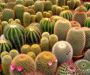 cactus and love image