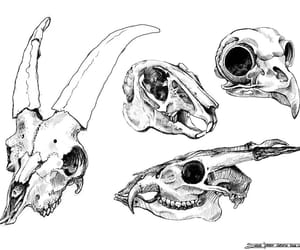 skeletons, skulls, and animal study image