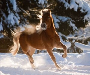 gallop, horse, and snow image