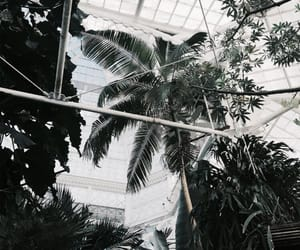 indie and palm trees image