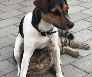 funny animals dogs cats image