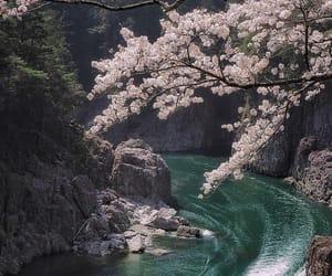 japan, lake, and sakura cruise image