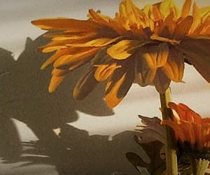 header, flowers, and yellow image
