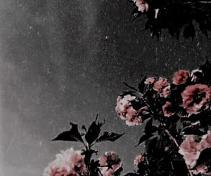 aesthetic, black and white, and flower image