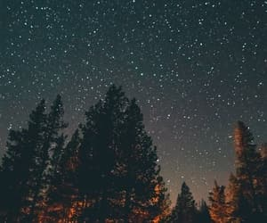 stars, night, and trees image