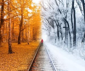 autumn, nature, and winter image