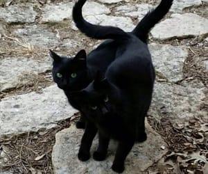 blackcat image