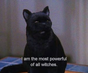 black cat, cat, and salem image