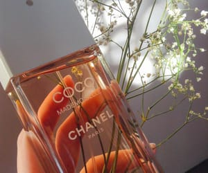 autumn, chanel, and coco image