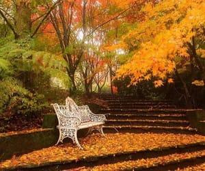 autumn, otoño, and beautiful image
