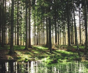 forest, green, and woods image