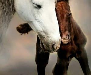 adorable, animals, and enchanting image
