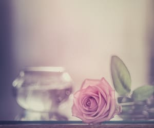 bloom, pastel, and photography image