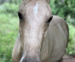 caballos, horse, and rancho image