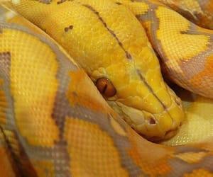 theme, yellow, and snake image