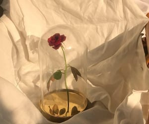 rose, aesthetic, and beauty and the beast image