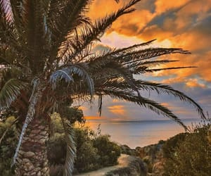 ocean, palms, and sunset image