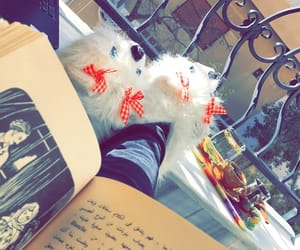 reading read book, books novel writer, and coffee winter november image