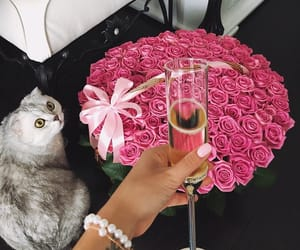 luxury, pink, and rose image