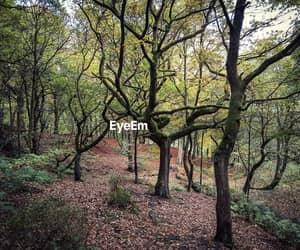 enchanted, forest, and eyem image