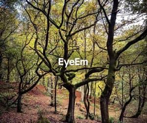 autum, landscape, and trees image