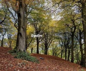 autum, landscape, and photography image
