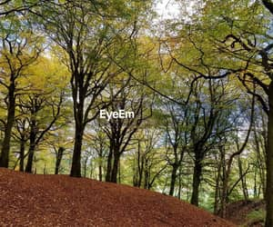 autum, photography, and trees image
