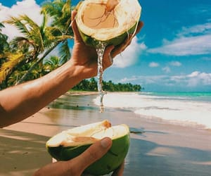 beach, summer, and coconut image