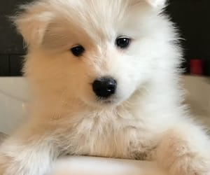 dogs, fluffy, and inspo image