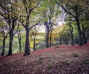 enchanted, autum, and landscape image