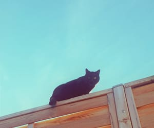 aesthetic, animals, and background image