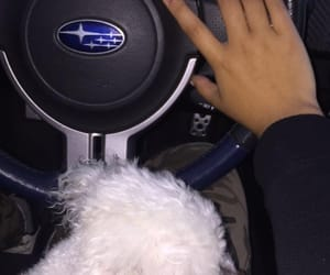 car, nails, and puppy image